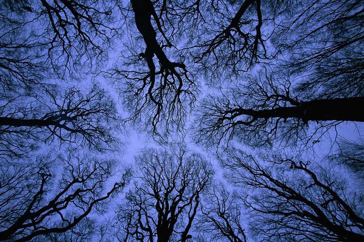 Фото №2 - Здравствуй, дерево! Тайная жизнь растений
