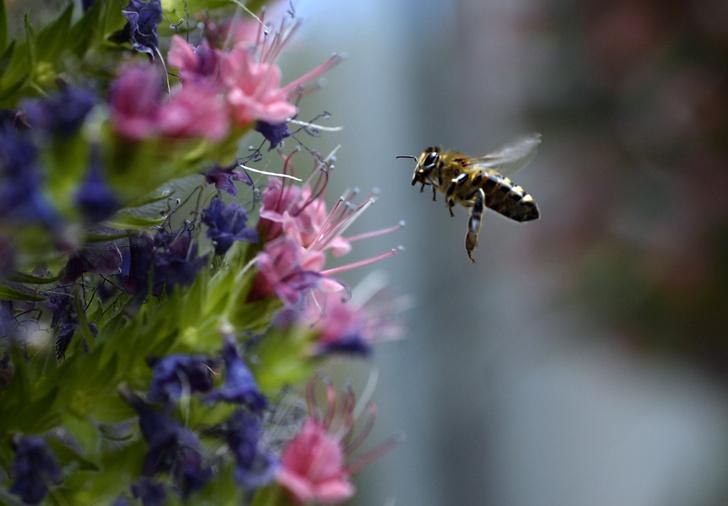Фото №1 - Назван любимый цвет диких пчел