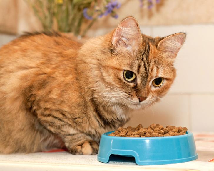 Фото №1 - Ученые заявили, что кошки не глупее собак