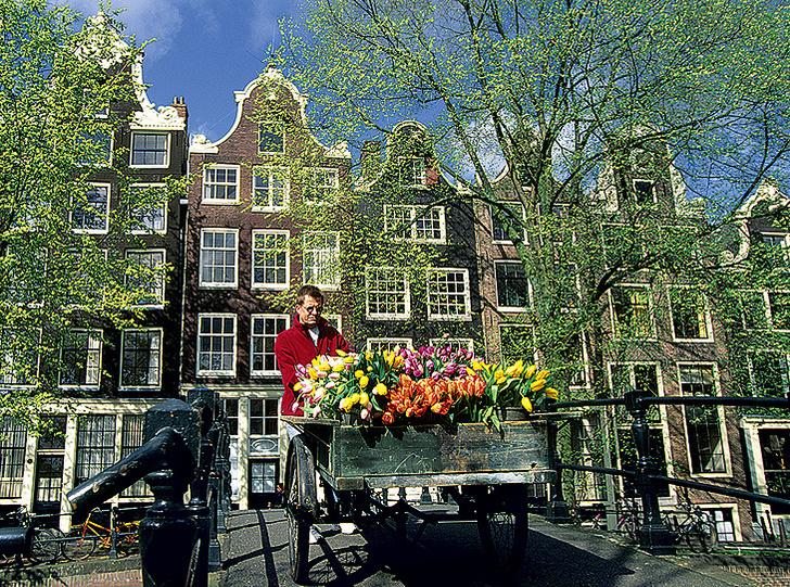 Фото №1 - Как тюльпаны стали национальным достоянием Нидерландов