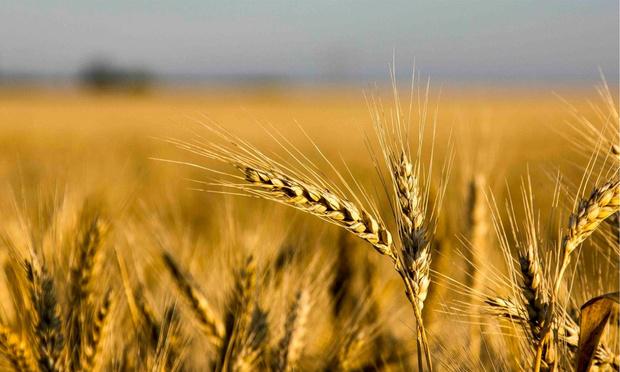 Фото №1 - «Пшеничное» и «Темное»: уникальные новинки от «Балтики»