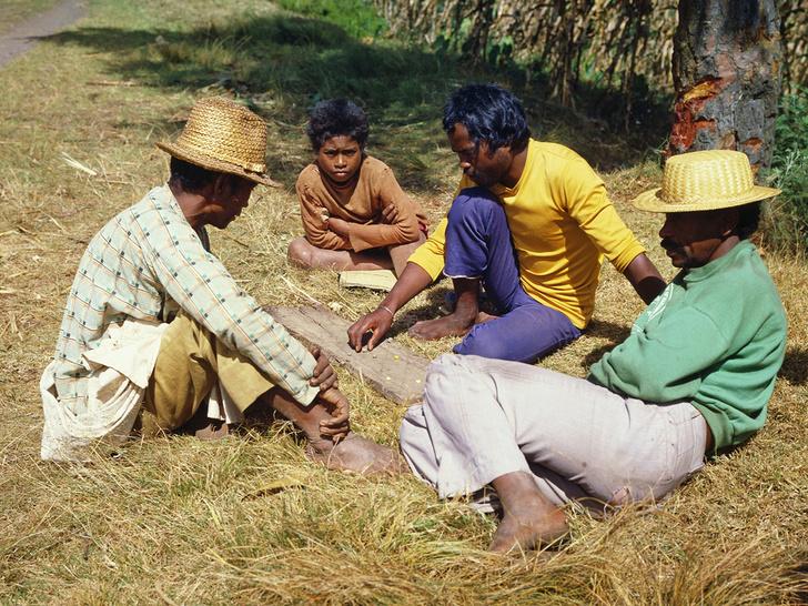 Фото №1 - Игротека: Мадагаскарская фанорона