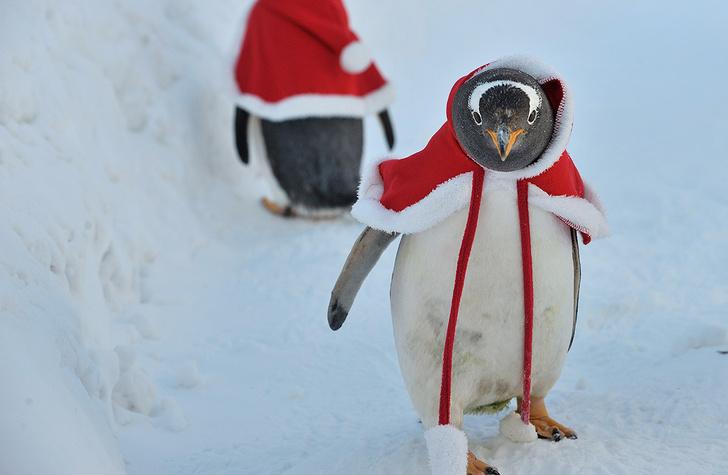 Фото №1 - Пернатый Санта