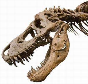 """Фото №1 - В Испании нашли крупное """"кладбище"""" динозавров"""