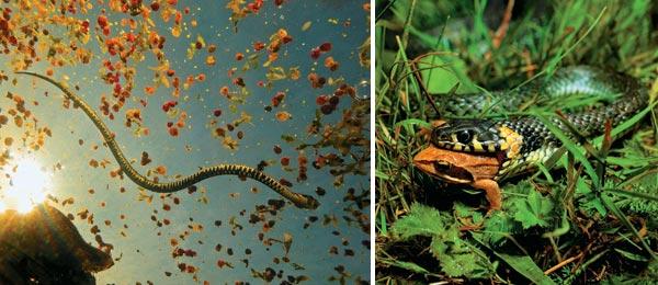 Фото №3 - Самый добрый змей