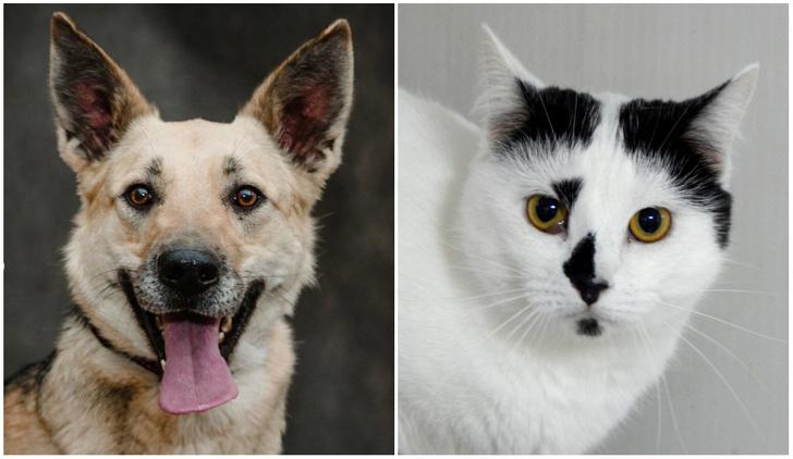 Фото №1 - Котопёс недели: собака Дива и кошка Абигайль