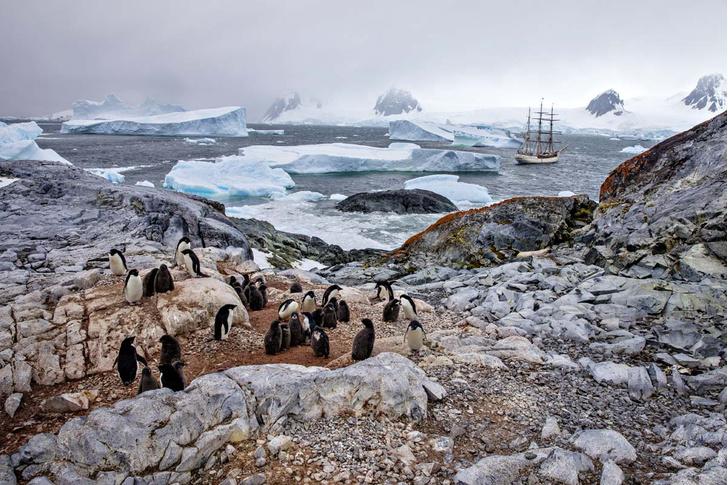 Фото №1 - Дрейф среди льдов. Антарктида