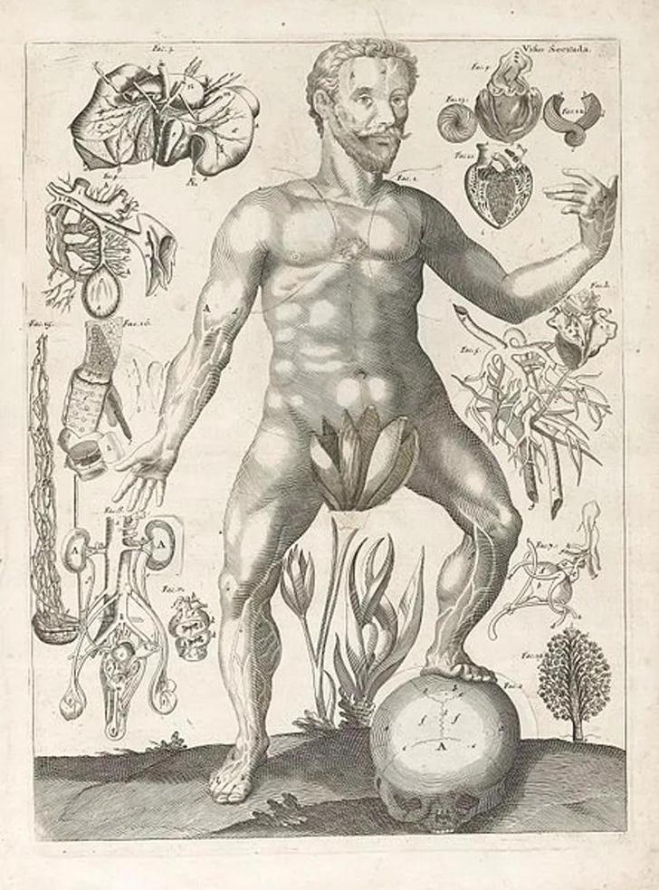 Фото №2 - 7 нелепых теорий древних ученых о сексе