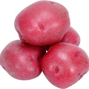 Фото №1 - В ЕС будут делать крахмал из GM-картофеля