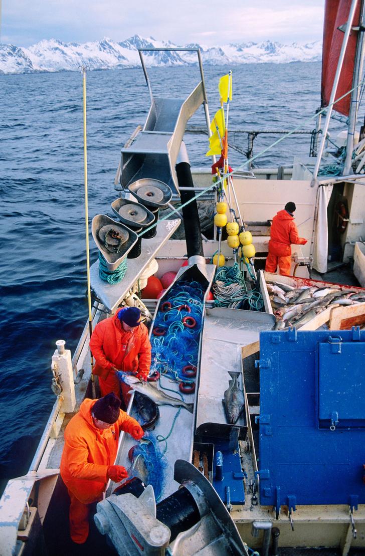 Фото №4 - Норвегия: рыбацкие сети
