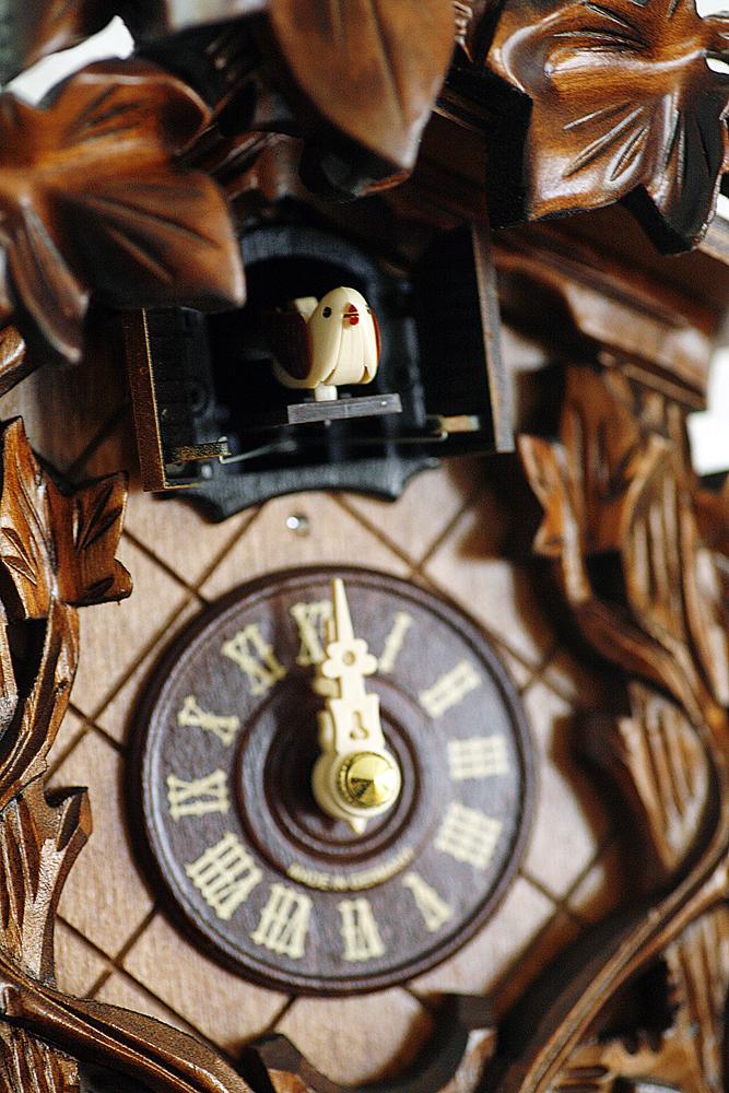 Фото №8 - Рабочий момент: Гнездо кукушки