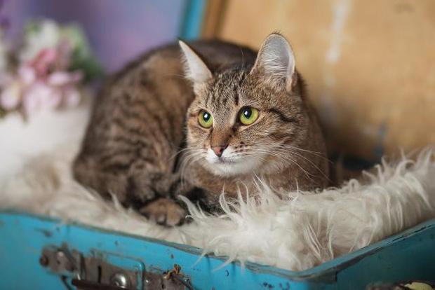 Фото №2 - Котопёс на карантине: кошка Дарёна и пес Киоки ждут своих людей
