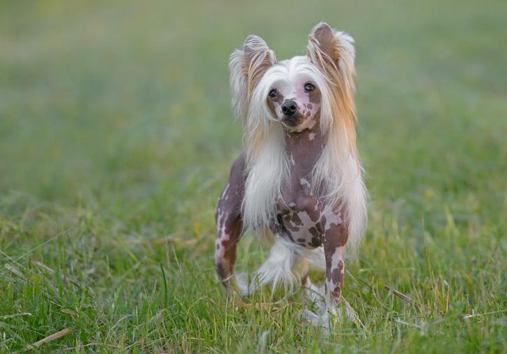 Фото №15 - 15 пород собак, которые не линяют