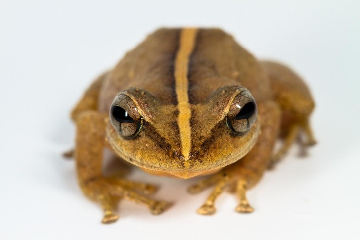 Фото №1 - Найдена древнейшая на Карибах лягушка