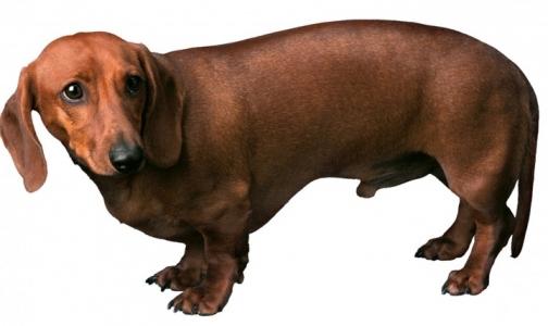 Фото №1 - Роспотребнадзор: Россияне заражаются глистами от собак и водопроводной воды