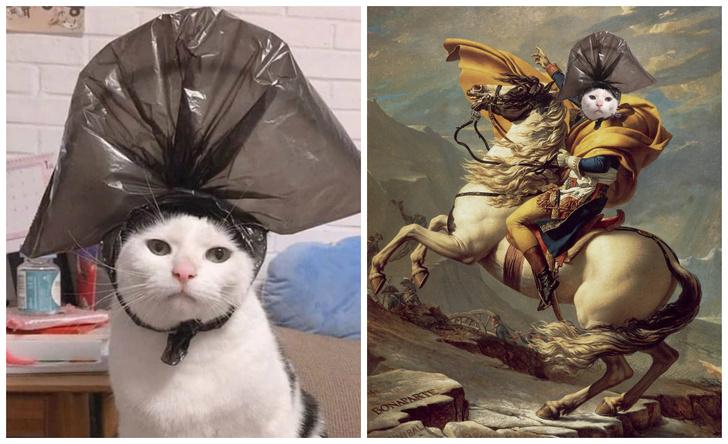Фото №1 - Лучшие фотожабы на кота в комичной шляпе из пакета