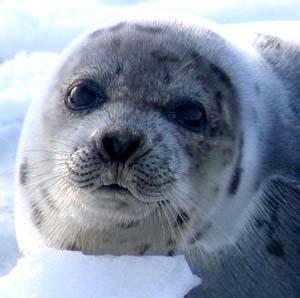 Фото №1 - Потепление убьет треть животных и растений