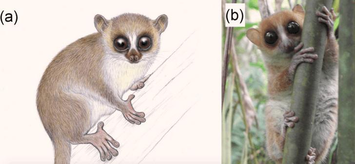 Фото №1 - Новый вид лемуров открыт на Мадагаскаре