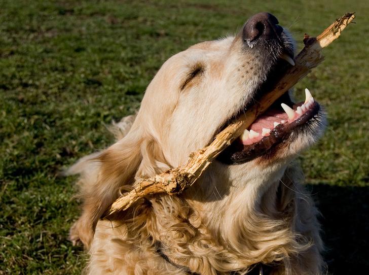 Фото №3 - Привычки, которые старят зубы