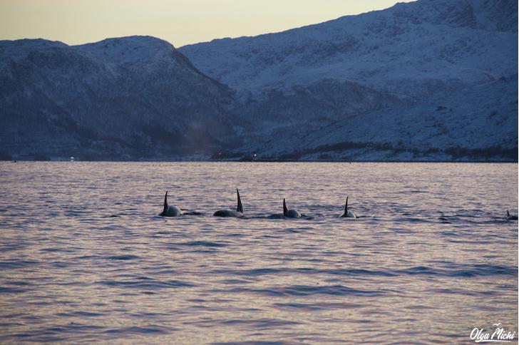 Фото №2 - Дивный север Норвегии
