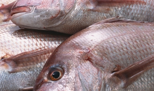 Фото №1 - Самым некачественным продуктом в петербургских магазинах оказалась рыба