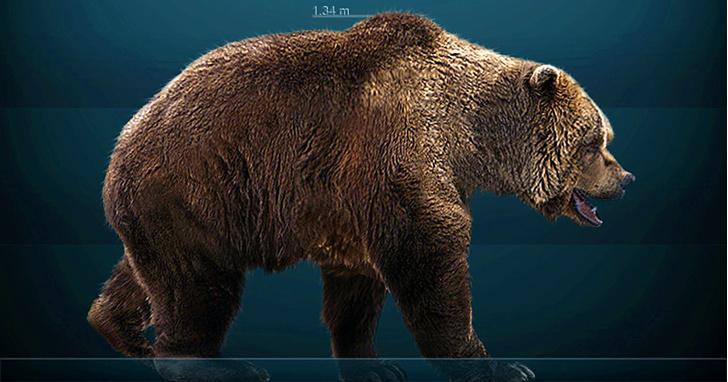 Фото №1 - Ученые выяснили, что пещерные медведи не ели мясо