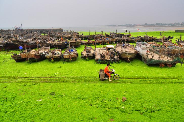 Фото №1 - Зеленое нашествие
