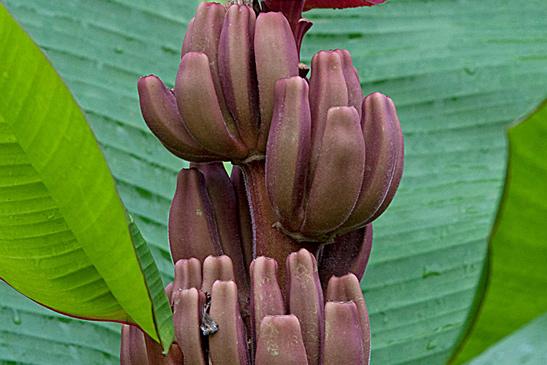 Фото №21 - Рабочий момент: банановый рай