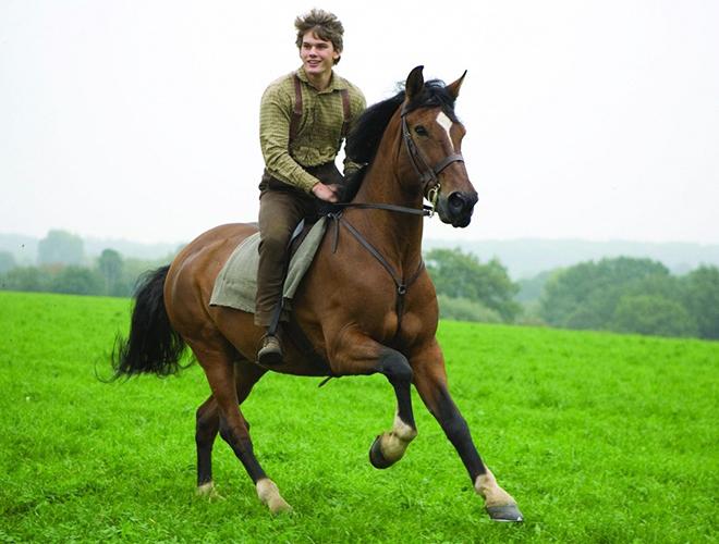 Фото №2 - Где в Рязани покататься на лошадях?
