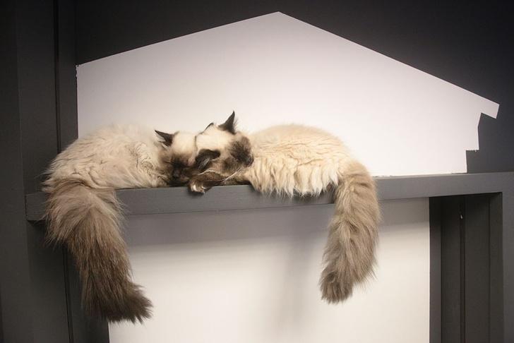 Фото №1 - День кошек