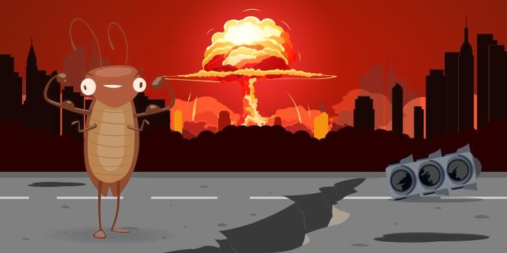 Фото №1 - Правда ли что тараканы могут выжить после ядерного взрыва