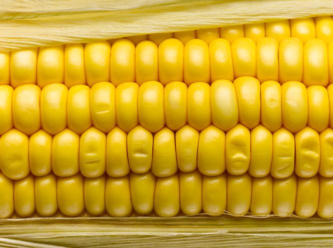 Фото №6 - «Царица полей»: все, что вы не знали (или забыли) о кукурузе