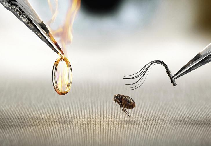 Фото №1 - Научись дрессировать насекомых