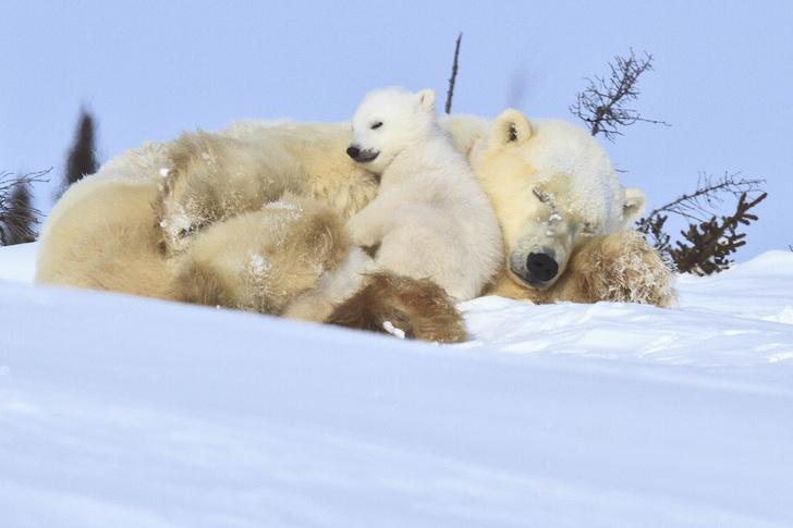 Фото №12 - Как выглядят детеныши самых опасных животных: 40 милейших фото
