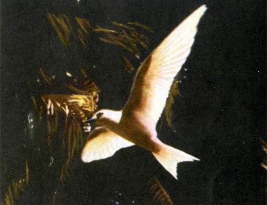 Фото №1 - В поисках гнезда белой крачки
