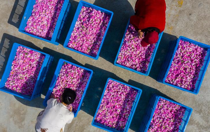 Фото №1 - Миллион, миллион, миллион нежных роз