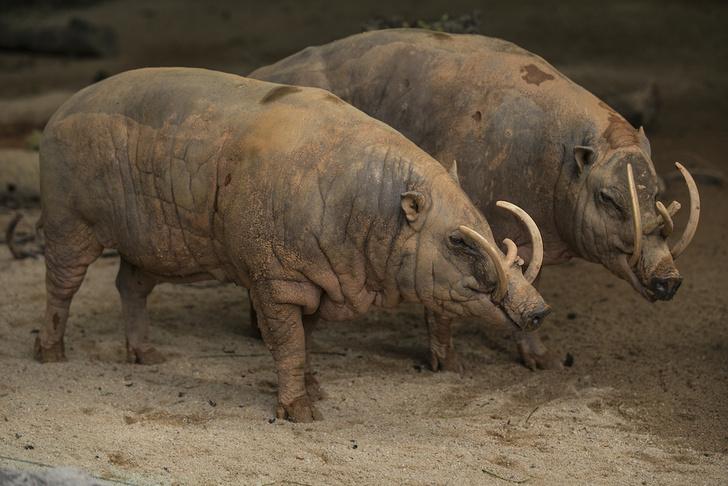 Фото №4 - Только посмотрите на них! 10 самых уродливых животных на Земле