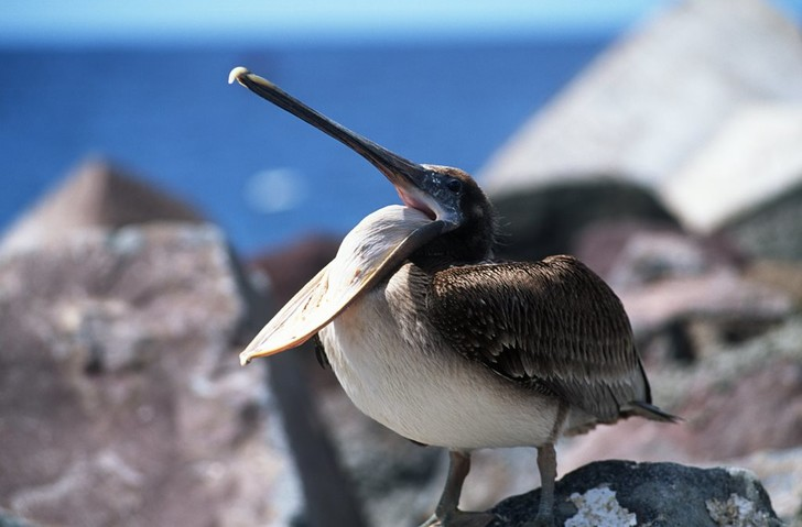 Фото №1 - Почему у птиц нет зубов