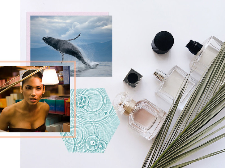 Фото №1 - Парфюмерный ликбез: почему вы хотите пахнуть китом и сексом