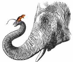 Фото №1 - Правда ли, что слоны боятся мышей?