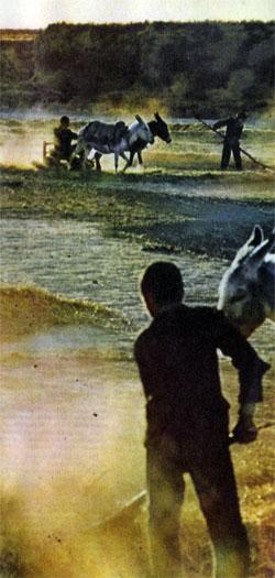 Фото №2 - Заендеруд — дающая жизнь