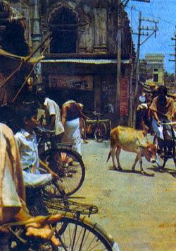 Фото №2 - В Пури, у бога Джаганнатха