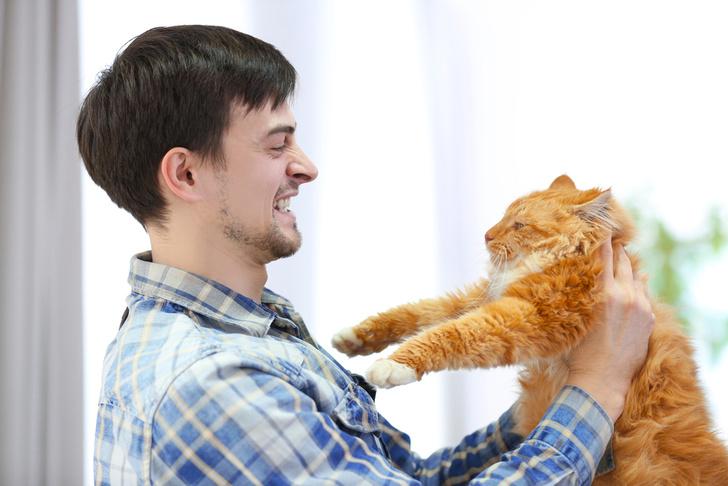Фото №1 - Переносимая кошками инфекция связана с приступами агрессии у людей
