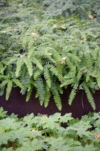 Фото №9 - Частный сад на Финском заливе по проекту бюро «Мох»