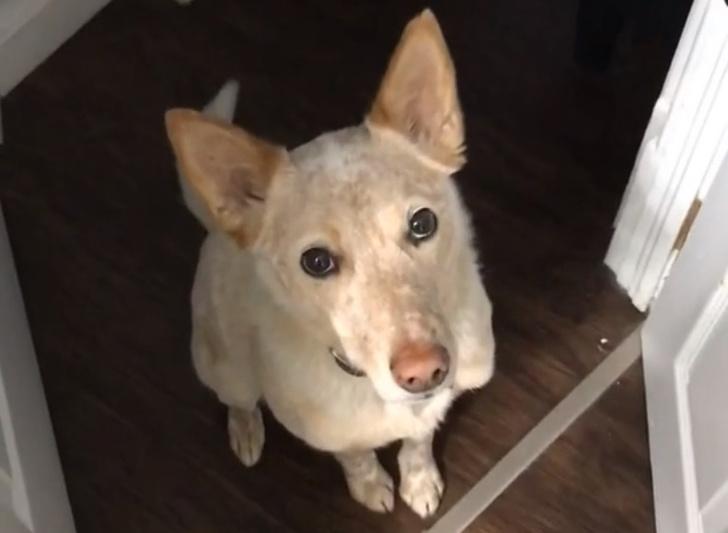 Фото №1 - Собака вежливо, но убедительно показывает, что хочет погулять (видео)