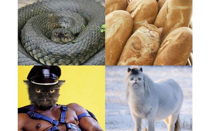 Фото №1 - Инстаграм «Коты везде»: звери, птицы, насекомые и неодушевленные предметы с мордами котов