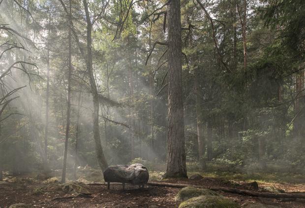 Фото №2 - Камень в лесу: совместный проект студии Front и Moroso