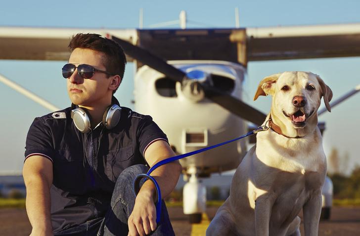 Фото №1 - Накануне Рождества в США собаки помогали авиапассажирам побороть стресс