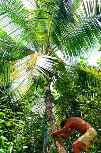 Фото №4 - Пять причин провести каникулы в отеле Joali на Мальдивах