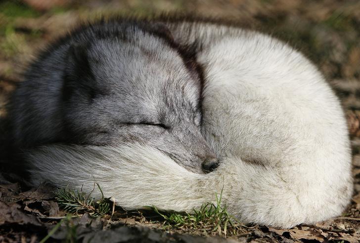 Фото №3 - Только ценный мех: научный взгляд на волосяной покров разных зверей